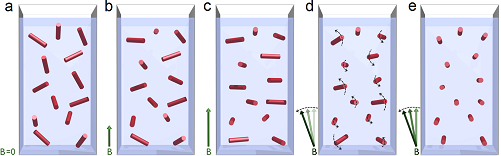 Figure 3: Model of magnetic alignment of hemozoin crystals in a dilute suspension. Red bars represent the magnetic hard axis of the crystals.