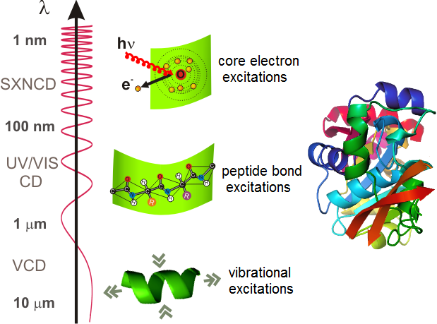 Figure 1: Chirality of proteins can be detected in a wide energy range of optical excitations